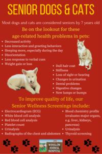 Senior Dogs & Cats
