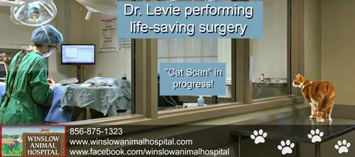 Butters observes levie sx cat scan - Small