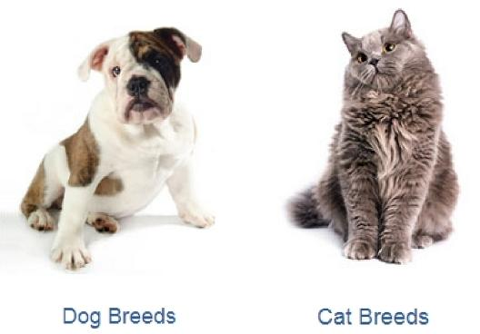 dog breed cat breed