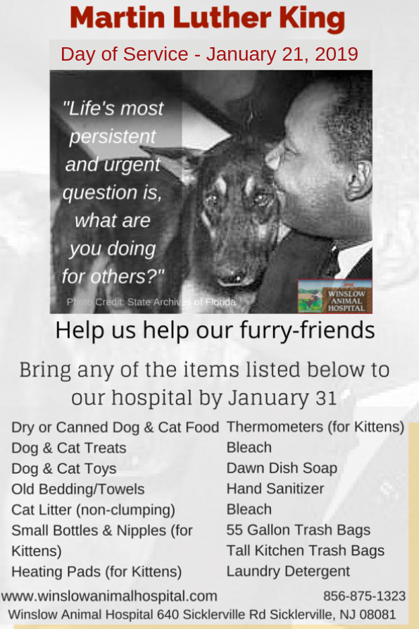 Martin Luther King Day Of Service For Dogs And Cats Winslow Animal Hospital Winslow Animal