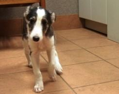 An Update On The Dancing Puppies Winslow Animal Hospital Dog