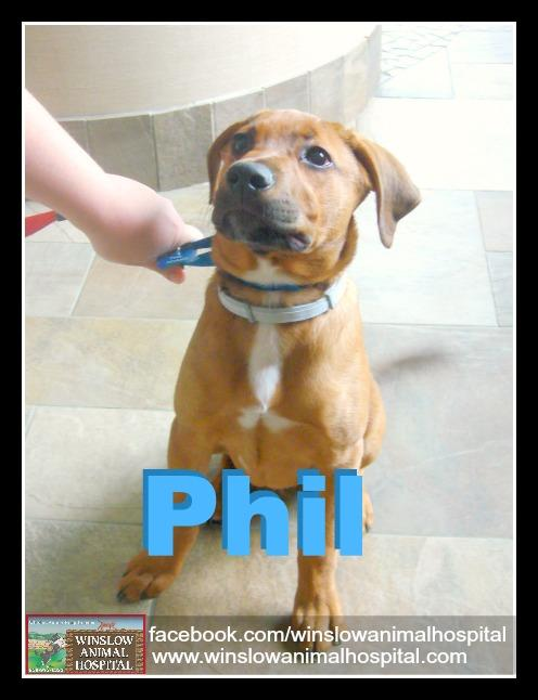 phil the dog