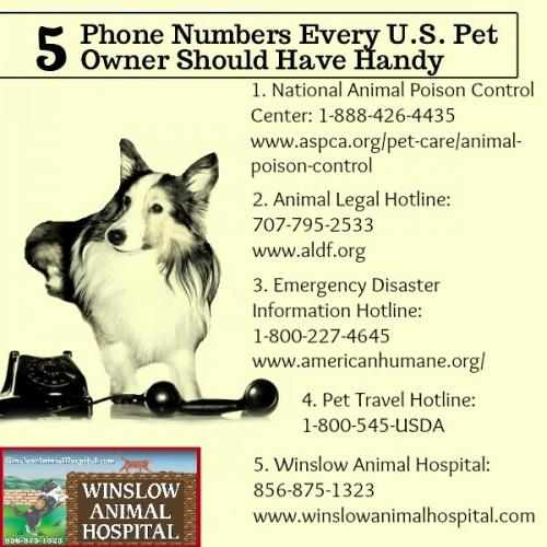 5-numbers-pet-emergency-WAH-e1452108782403