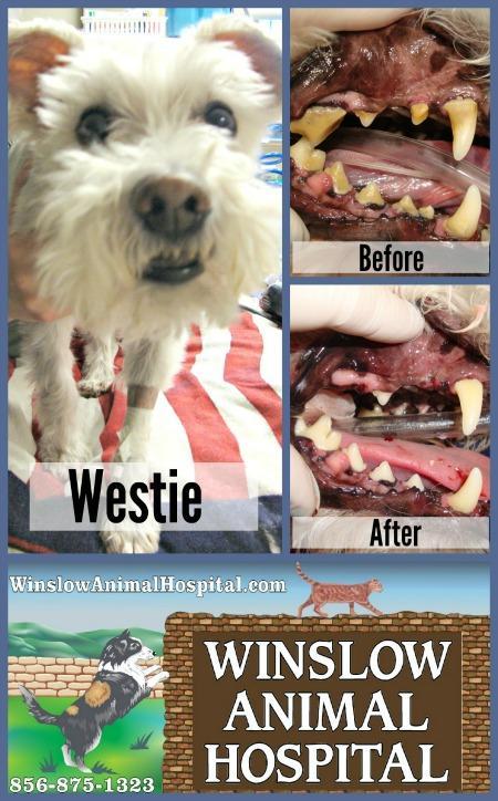 Westie Collage 2