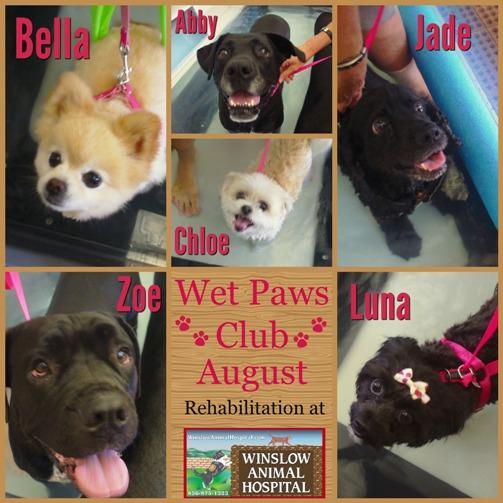 Wet Paws Club August