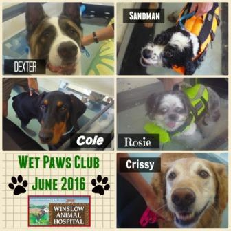 Wet Paws Club June 2016 - Compressed
