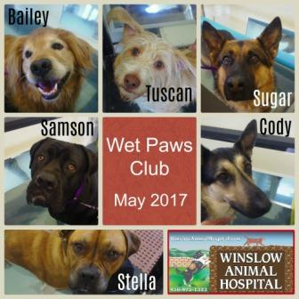 Wet Paws Club May - Copy