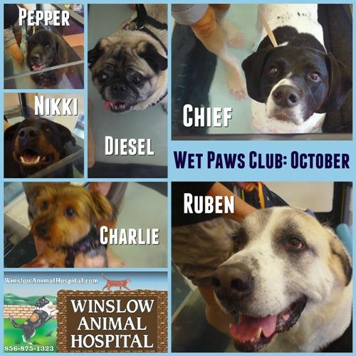 Wet Paws Club October 16 - Copy