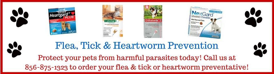 Flea tick and heartworm