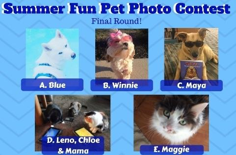 Summer Fun Pet Photo Contest Finals