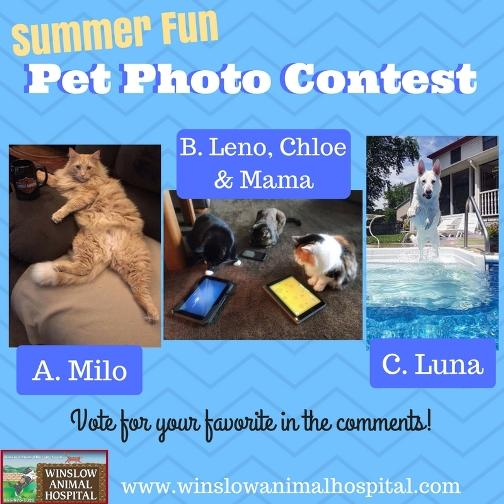 Summer Fun Photo Contest 2