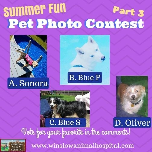 Summer Fun Photo Contest 3 (1)