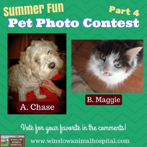 Summer Fun Photo Contest 4