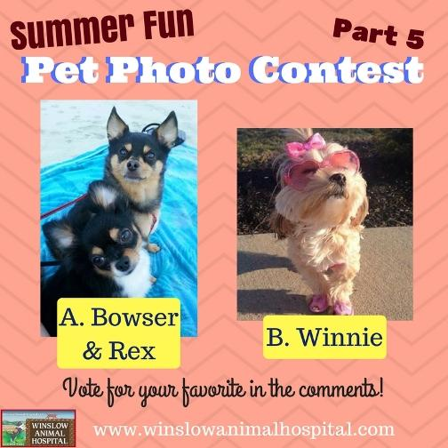 Summer Fun Photo Contest 5