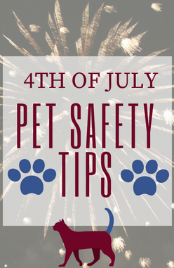 4th Of July Pet Safety Tips Winslow Animal Hospital Dog Cat
