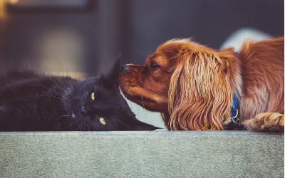 image for Pet Diabetes Awareness Month
